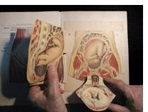 Anatomie En Physiologie