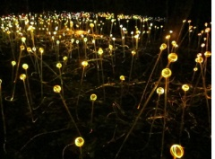 Forest of Light sculpture by Bruce Munro, Longwood Gardens, Kennett Square, PA